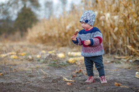 Beautiful baby in warm stylish sweater Little girl eating corn on the field. Harvest time. organic agriculture for children. Cute child on a foggy autumn evening outdoor. Happy children day concept