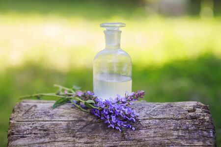 bouquet Salvia pratensis, meadow clary or meadow sage purple flowers near bottle of medicine on stump in forest on background of green grass. Collecting herbs for tea. Plants to collect oil. Collection of herbs in season. Medicines from medicinal plants.