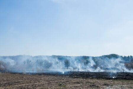 Large-scale forest fire. Burning field of dry grass and trees. Thick smoke against blue sky. Wild fire due to hot windy weather. dangerous effects of burning grass in fields in spring and autumn. Фото со стока