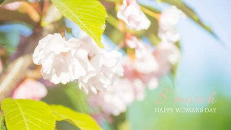 Spring border or background art with pink blossom. Pink cherry blossoms against the blue sky. Abstract blurred background. Springtime