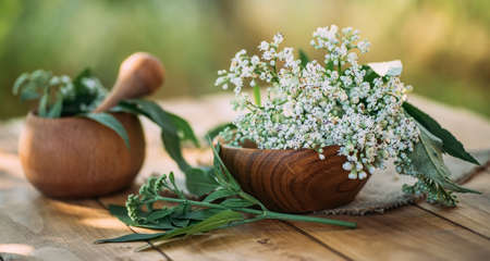 Fresh valerian flowers in wooden plate on table. mortar with prepared potion of valerian root. use of medicinal plants in traditional medicine.