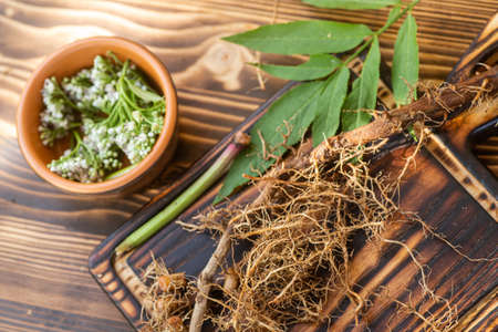 Valeriana roots, leaves and flowers close-up. Collection and harvesting of plant parts for use in traditional and alternative medicine as a sedative and tranquilizer. Selective focus. Stok Fotoğraf