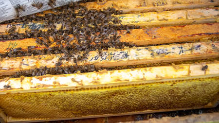 winter cluster is a well-defined cluster of honey bees that forms inside a beehive as outside air temperature decreases winter cluster tighter and more compact. bees cling tightly together on combs in hive In beekeeping.