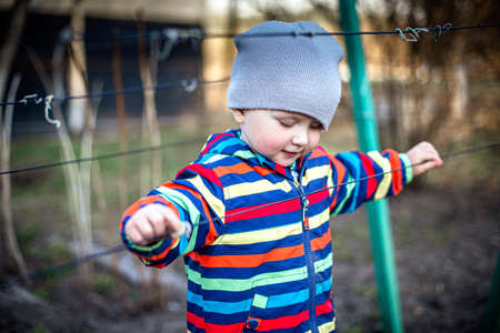 A child touches the ropes for the garter of grapes. Preparing the vine for the fruiting season.