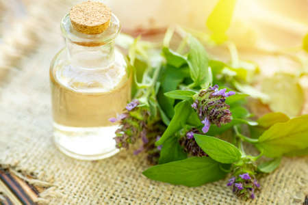 Prunella vulgaris, self-heal, carpenter's herb purple flower tincture in bottle ready for drying and making tea and infusions. Useful herb for use in cosmetology and alternative medicine
