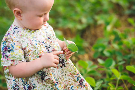 little girl in a dress shows finger on soybean sprout in hands. Glycine max, soybean, soya bean sprout growing soybeans on scale. Agricultural soy plantation on sunny day. untreated field with weeds.