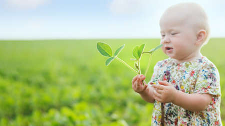 little girl holds young soybean sprout. Glycine max, soybean, soya bean sprout growing soybeans on scale. Agricultural soy plantation on sunny day. untreated field with weeds 免版税图像