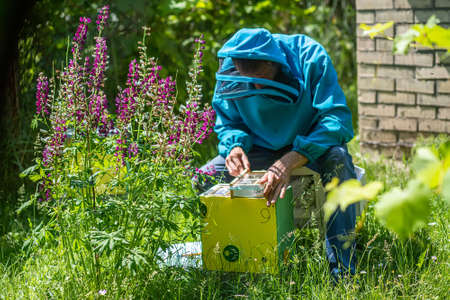 Beekeeper holding a small Nucleus with a young queen bee. Breeding of queen bees. Beeholes with honeycombs. Preparation for artificial insemination bees. Natural economy. Queen bee cages 免版税图像