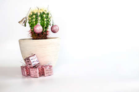 Tropical summer cactus looks like Christmas tree with Christmas toys balls and gifts. copy space .. New Year's banner isolated on white background. Minimal Christmas theme. New year sale concept