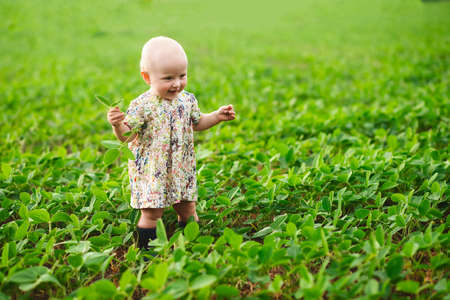 Happy girl on the field with young soybean sprouts. A green field with plants. child walks in the summer near the soy in rubber boots. agricultural landscape 免版税图像