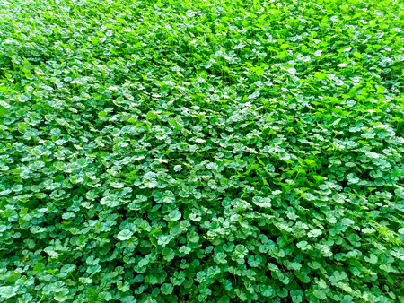 Green grass background texture Banco de Imagens