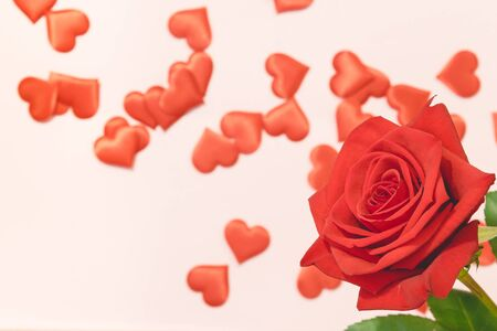 Valentine's day background,Red rose with red hearts on pink background,For card and wedding background. Copyspace 版權商用圖片