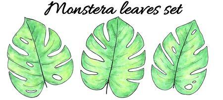 Hand drawn watercolor tropical plants set. Watercolor monstera leaves 版權商用圖片