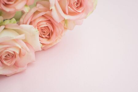 Background of Pink roses on pink background. close-up. copyspace