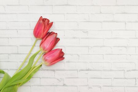 Red Flowers tulips on a white background of wall of brick, spring and holidays, Women's Day. Copyspace