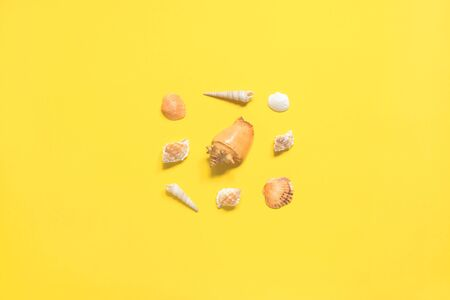 Summer flat lay. Shells of various kinds on a yellow background. Seashells on a pastel background. Vacation concept, free space for text.