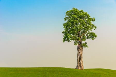 one stand alone tree on grass field in morning sky