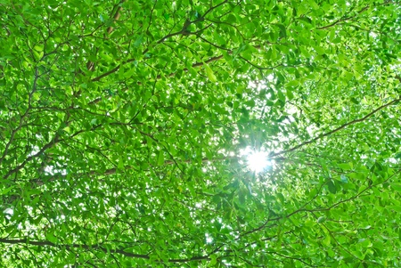 sun shine through tree branch and leaf photo