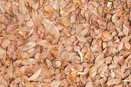 random dry leaf on ground Stock Photo