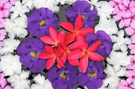 gruppo di fiore colorato di organizzare s sull'acqua Archivio Fotografico