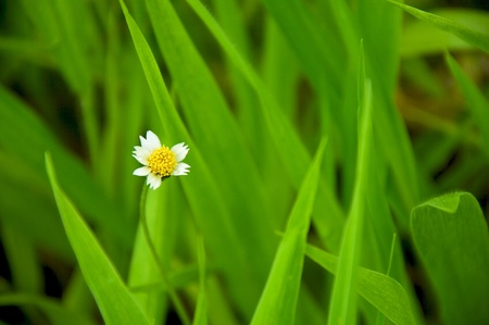 white grass flower in green leaves background  Stock Photo