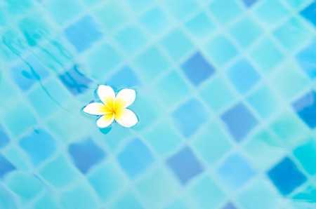 white flower on aqua blue water Stock Photo