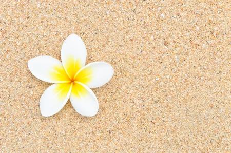 white flower on sand beach Stock Photo