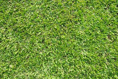 big leaf grass top view close up photo