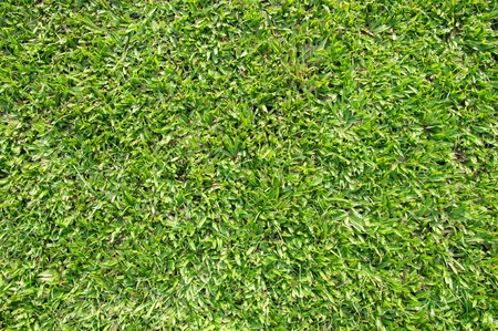 grande erba vista top in foglia da vicino