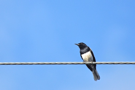 black and white bird on metal wire in clear blue sky