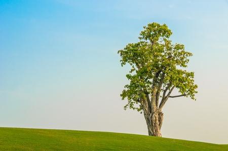 un albero sul campo in erba nel cielo blu