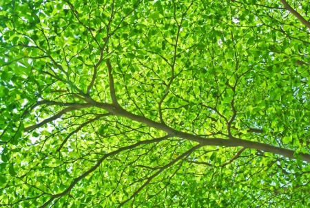 parte del ramo di un albero e foglia