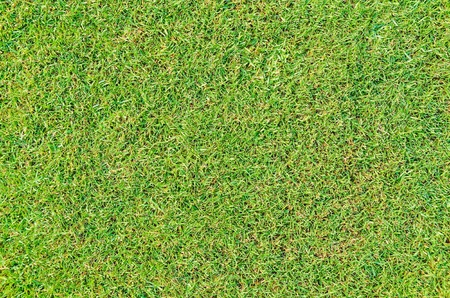 close up top view of small leaf grass  photo