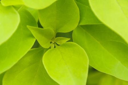 fresca foglia verde nel nucleo vista da vicino