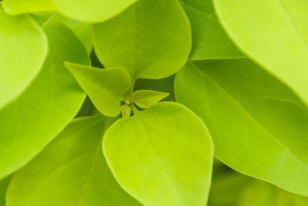 fresh green leaf in core close up view photo