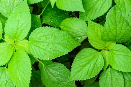 gruop di fresco verde foglia in giardino con acqua spruzzata su