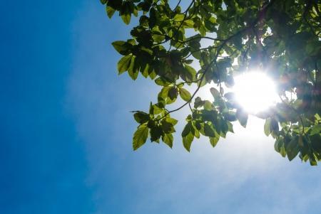 sole brillare attraverso foglia d'albero sotto il cielo blu