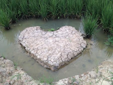 campo di riso e del suolo a forma di cuore con acqua circondato