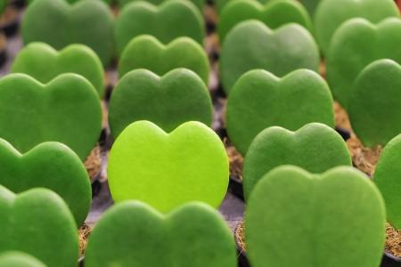 gruppo di cuore verde pianta di forma in fila con una luce verde spiccano