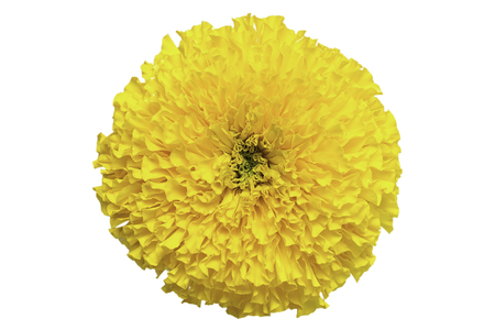 top view of marigold flower isolate on white background