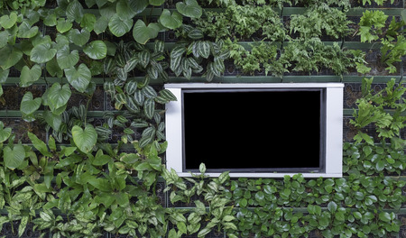 black flat screen monitor with silver aluminum frame on green plant wall background