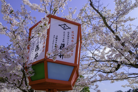 red wood frame japanese lantern in sakura flower festival Stock Photo