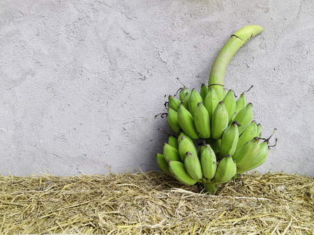 group of fresh green banana on dry grass and rough texture cement wall background