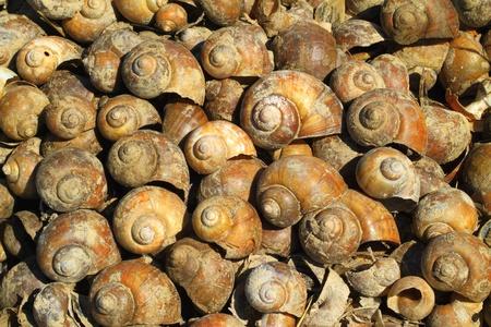 carcass: Shell karkas achtergrond Stockfoto