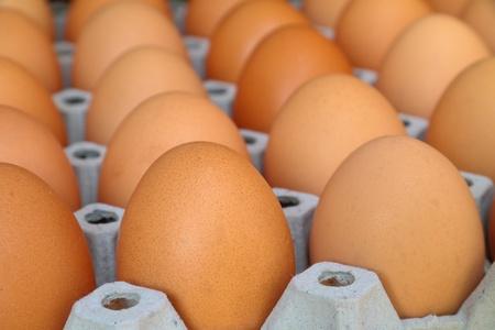 Egg rows photo