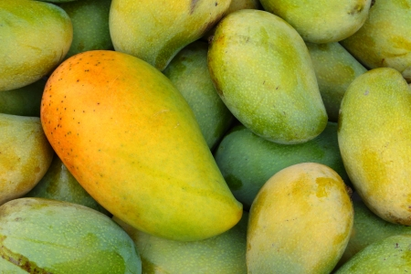 Mango fruit , thailand  photo