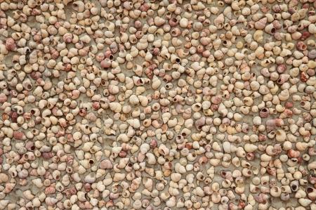 carcass: Many shell carcass on the wall Stock Photo