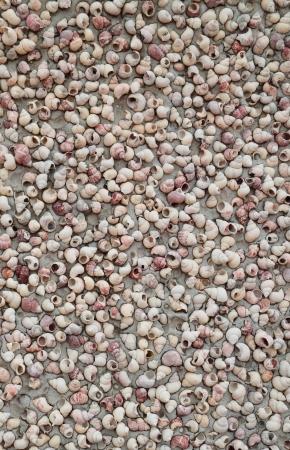 carcasse: Beaucoup carcasse shell sur le mur