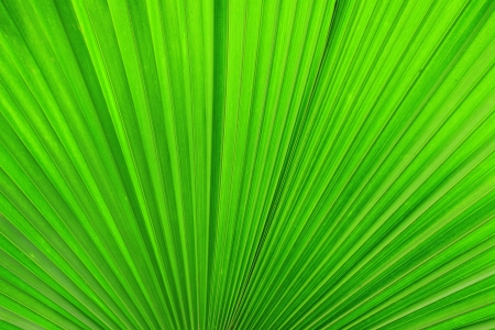 Palm leaves texture Stock Photo - 15735345