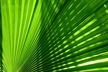 Palm leaves texture with shadow Stock Photo